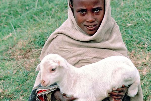 formal-and-informal-land-tenure-systems-in-Afar-region-Ethiopia