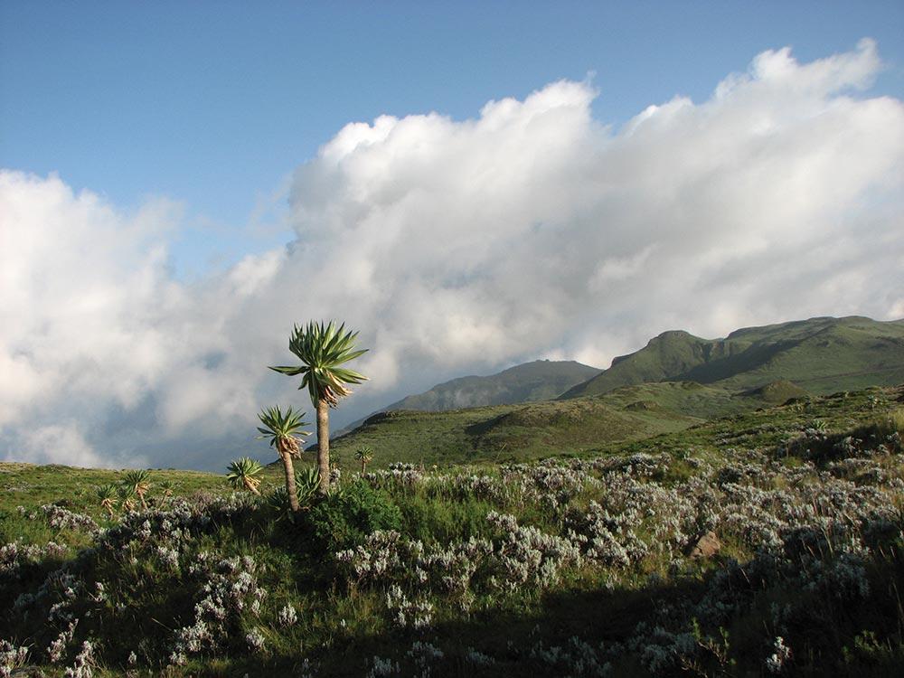 Menz-Guassa Community Conservation Area